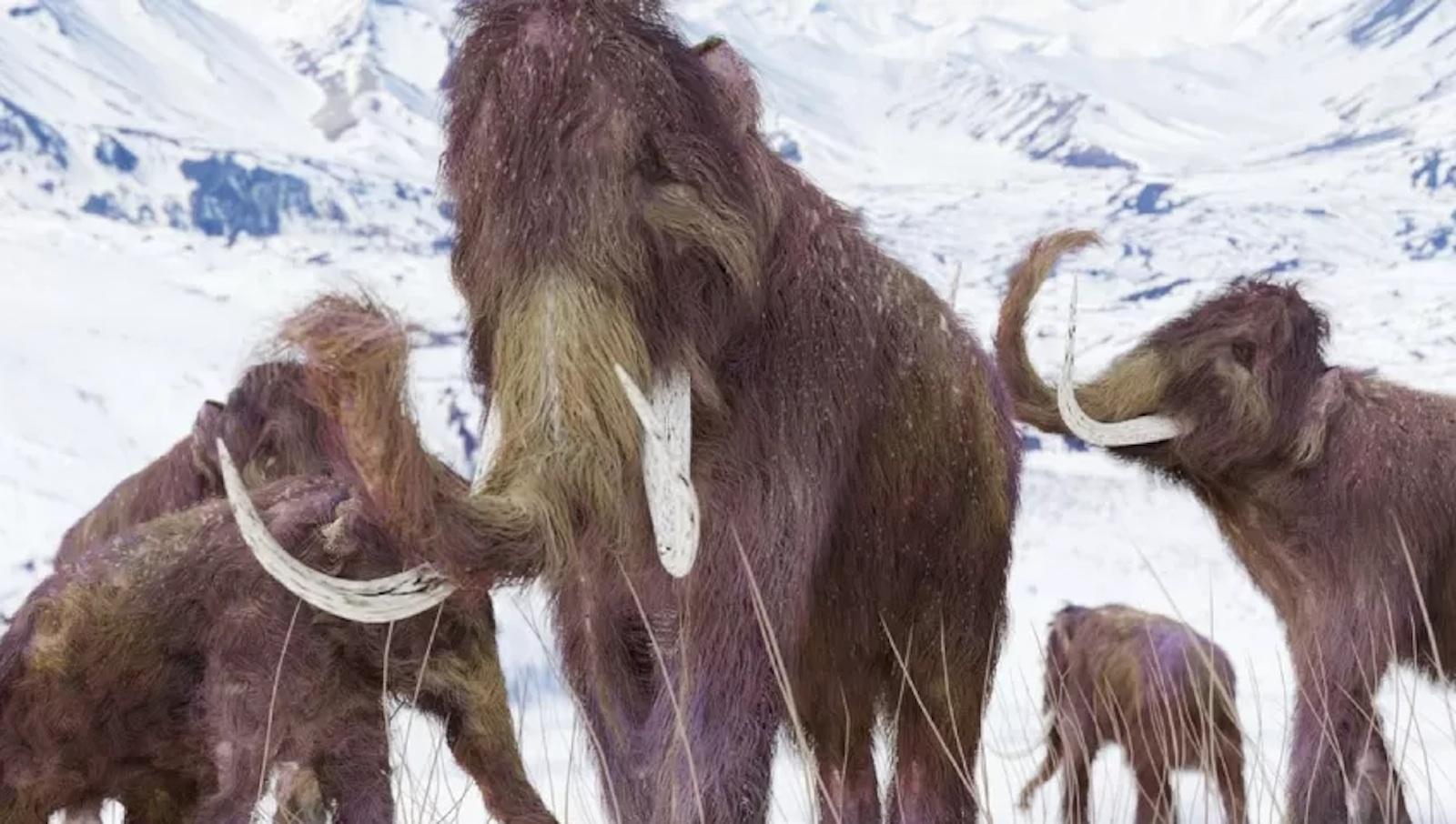 Jurassic Park nella realtà: scienziati provano a ricreare mammiferi estinti con il DNA