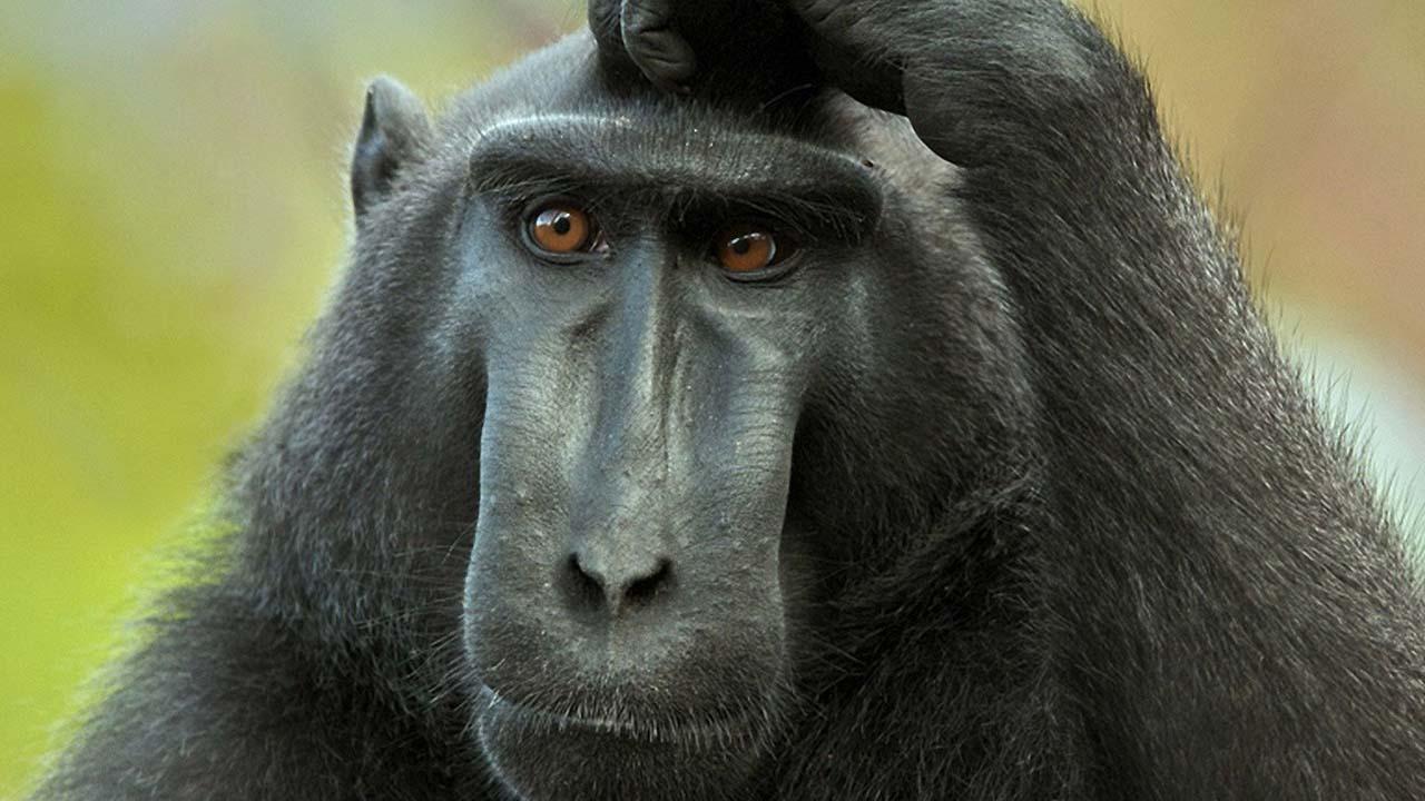 Cina: esperimenti sul primo embrione ibrido uomo-scimmia