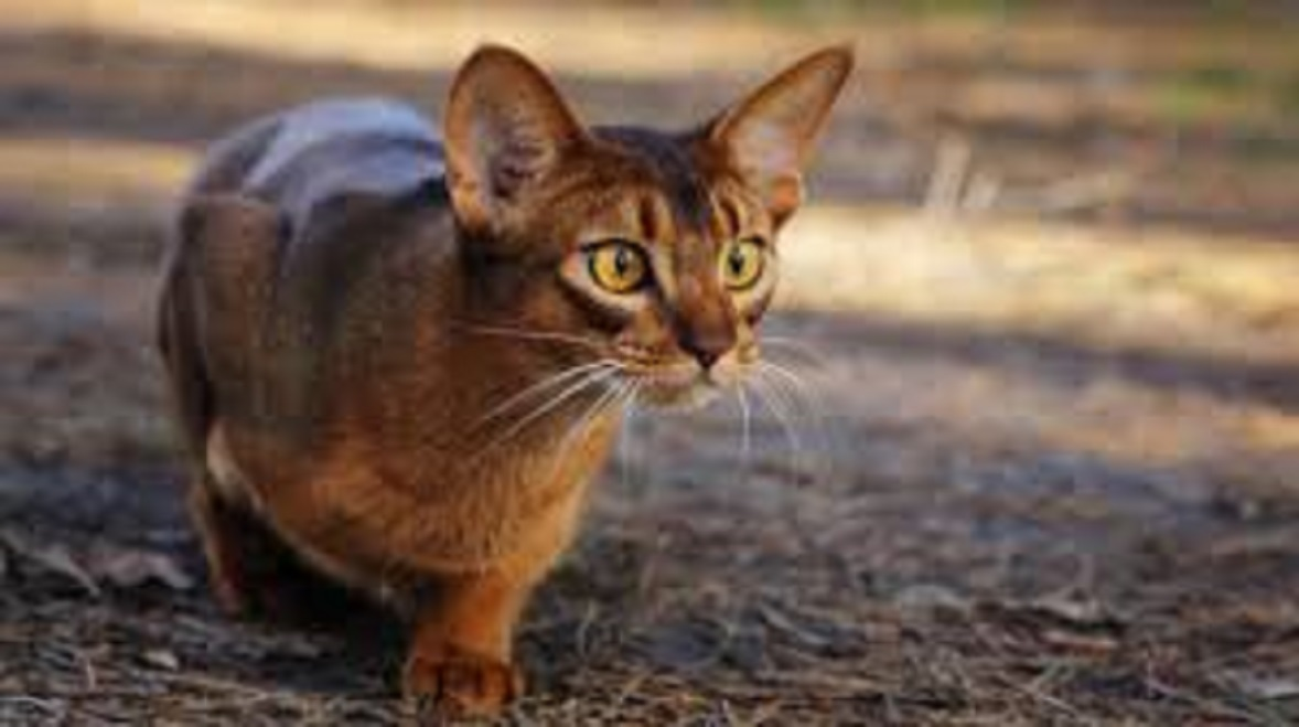 Le chat qu'il faut selon le signe astrologique