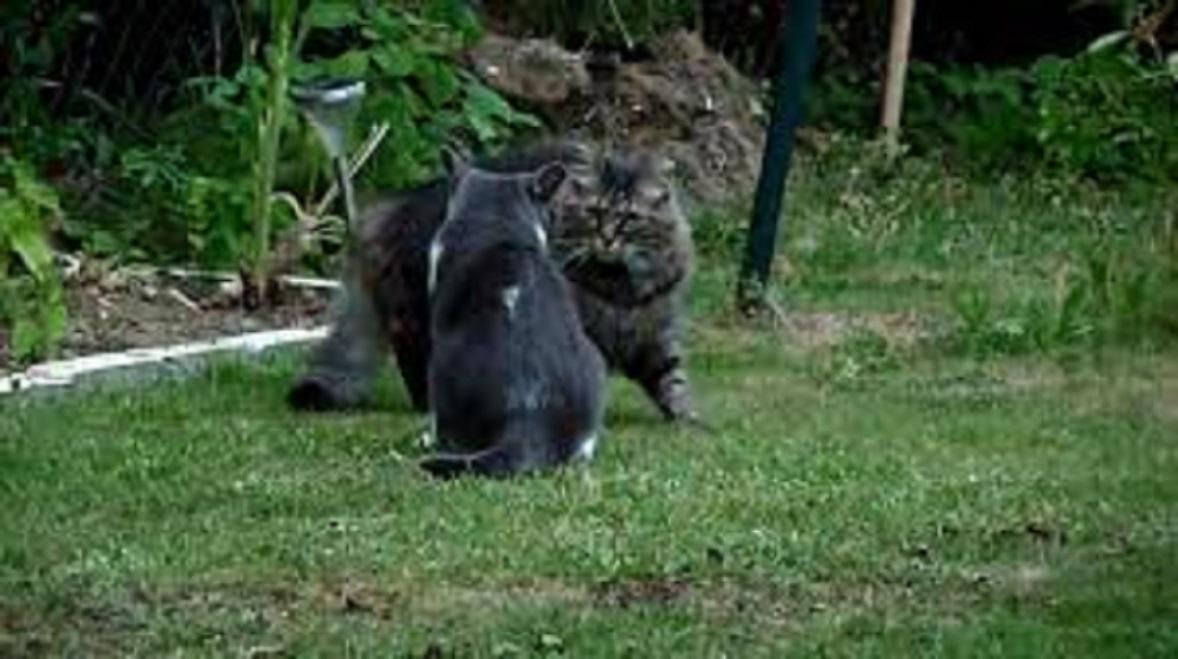 Les astuces pour réussir la cohabitation entre chats