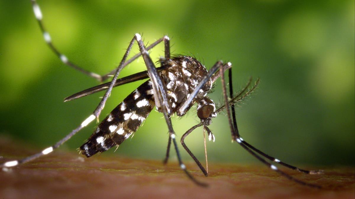 Multas de hasta 3.000 euros para quien no elimine los focos de mosquito tigre en Valencia